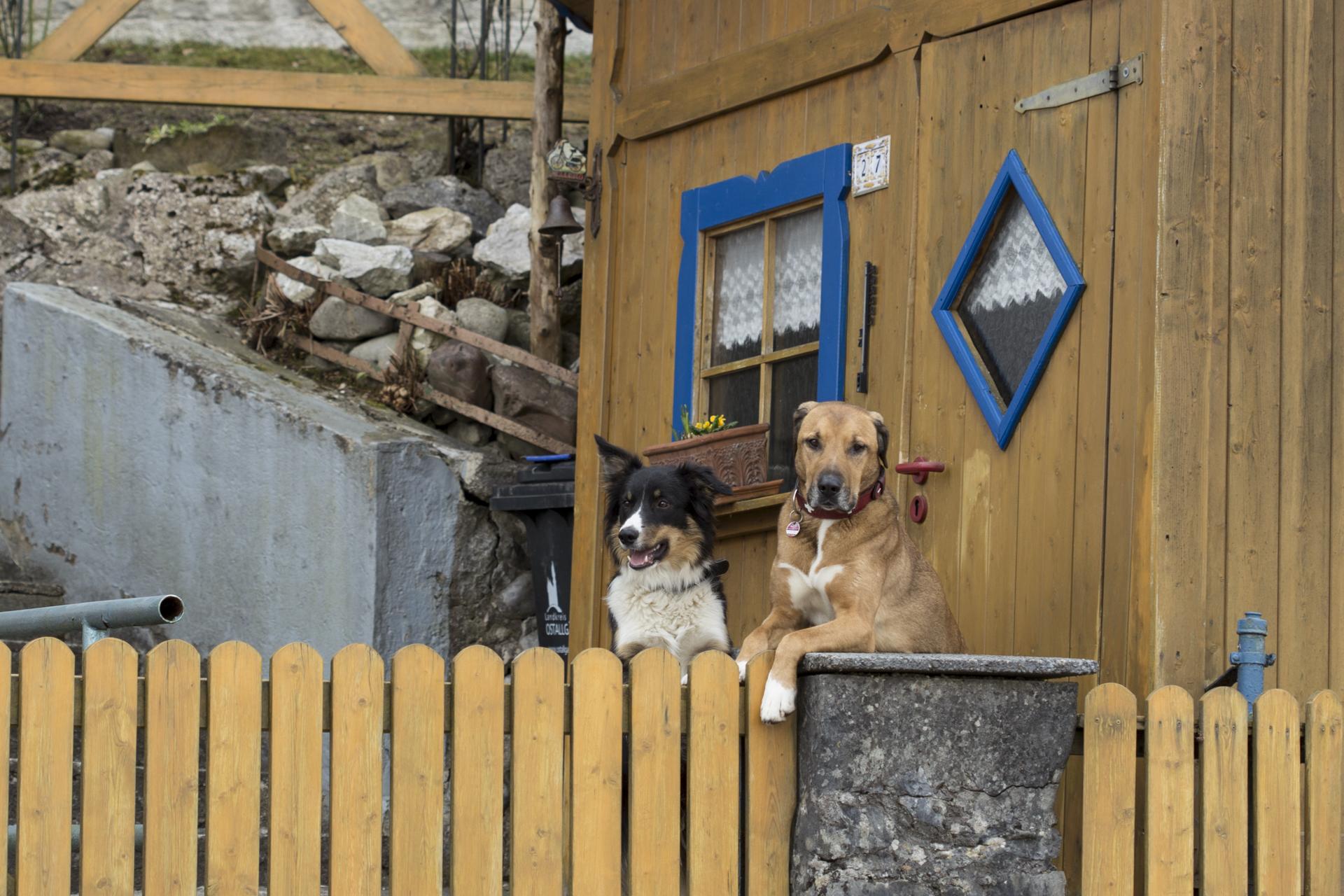 hunde bewachen haus