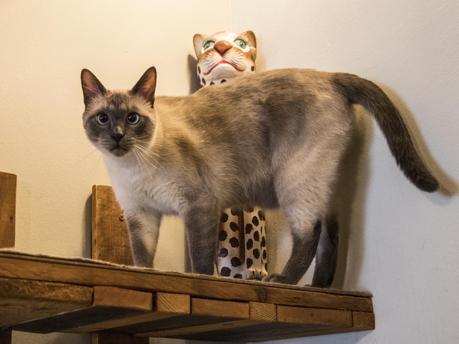 Katzencafe milou
