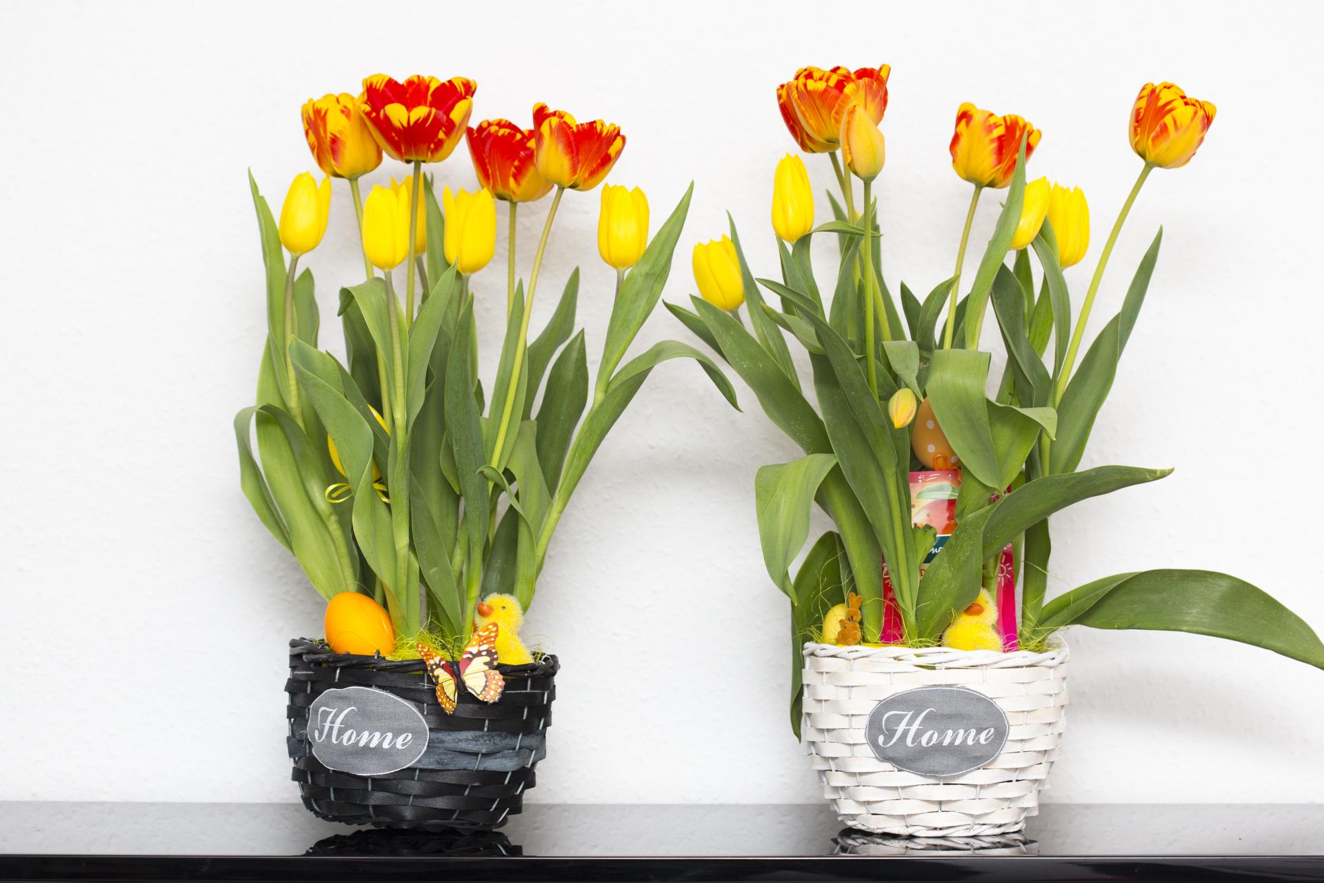 tulpen verschenken idee