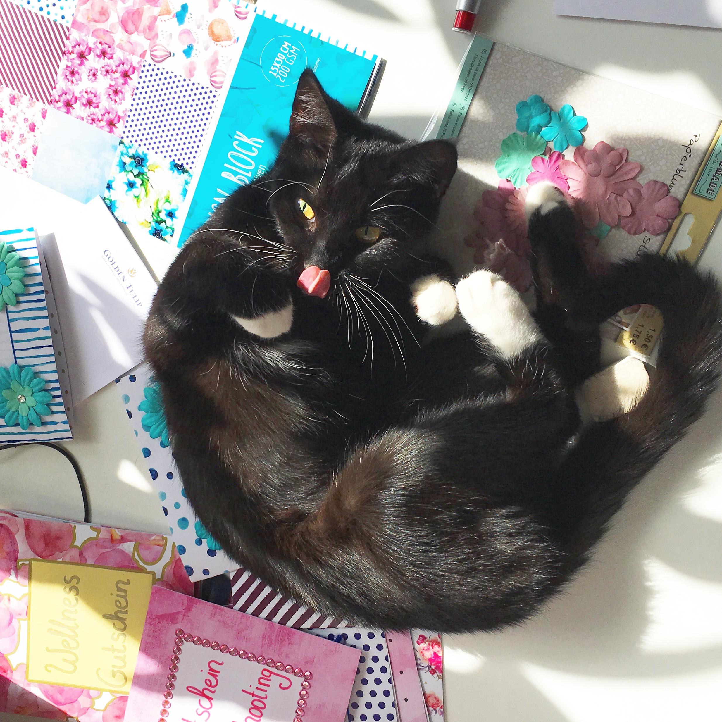 niedliche schwarze katze auf papier